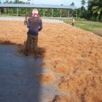 coconut fiber drying
