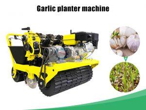 garlic planter