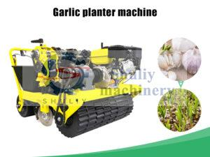 garlic planter