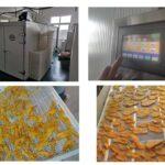 mango dehydrator machine