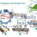 chili pepper washing drying line