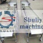 jujube sorting machine